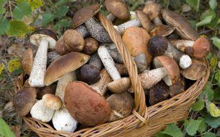 Какой должна быть первая помощь при отравлении грибами