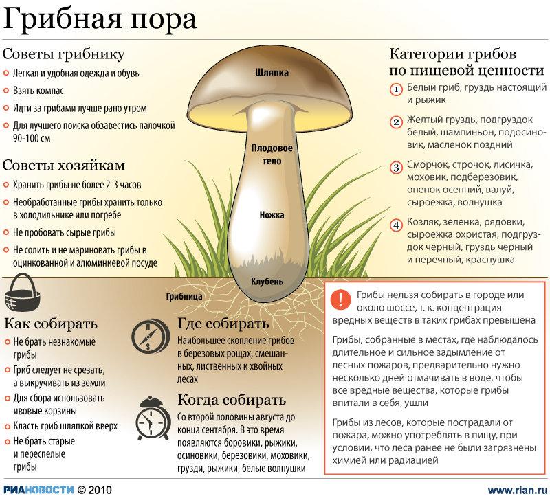 Съедобные и ядовитые грибы - памятка грибнику