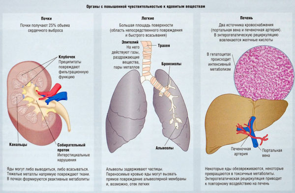 органы с повышенной чувствительностью к ядовитым веществам