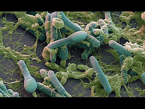 токсин ботулизма